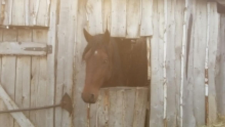 Лошадей и свиней арестовали в счет долга