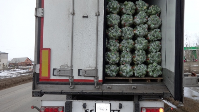 Россельхознадзор не пропустил в область 40 тонн редьки