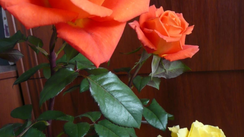 В Пономаревском районе задержали мужчину за кражу 120 роз