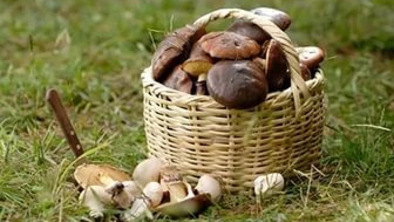 В Оренбургской области 6 человек отравились грибами