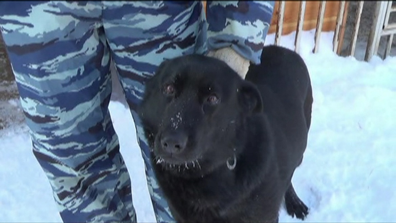 Собака Никка взяла след и нашла грабителя