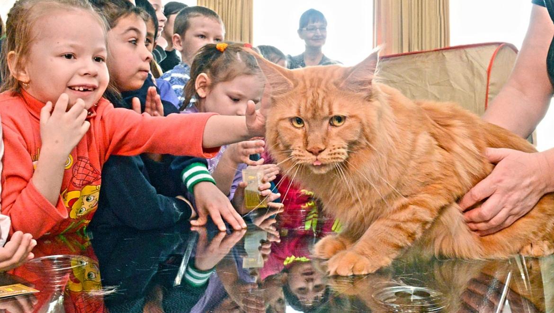 Необычный кот по кличке Художник живет в Оренбурге