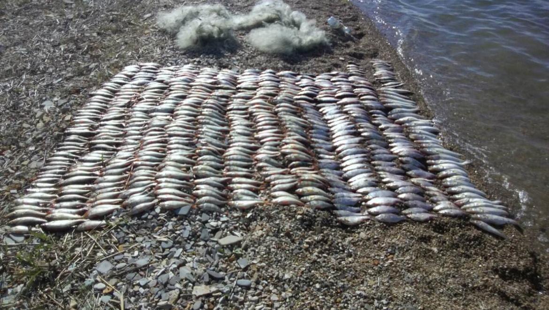 Незаконная ловля рыбы