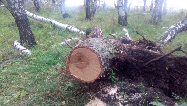 Незаконная заготовка древесины обернулась уголовным делом