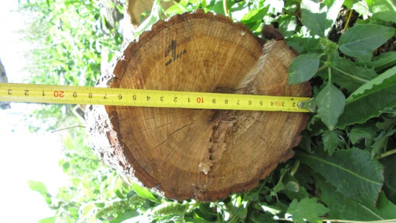 Заготовка дров для себя без разрешения - запрещена!