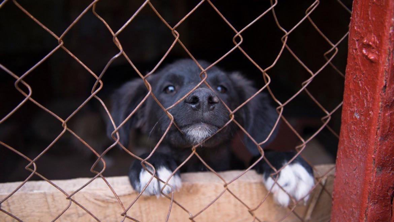 Скандал в оренбургском приюте для животных. Волонтеры просят не перечислять деньги бывшему директору