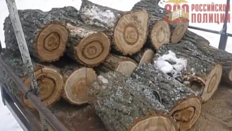 Незаконная вырубка леса в Сакмарском районе