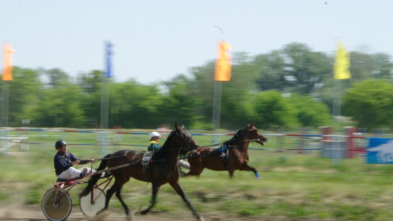 Перспективы развития конного спорта в Оренбурге
