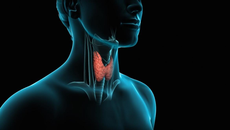 День здоровой щитовидной железы в Оренбурге