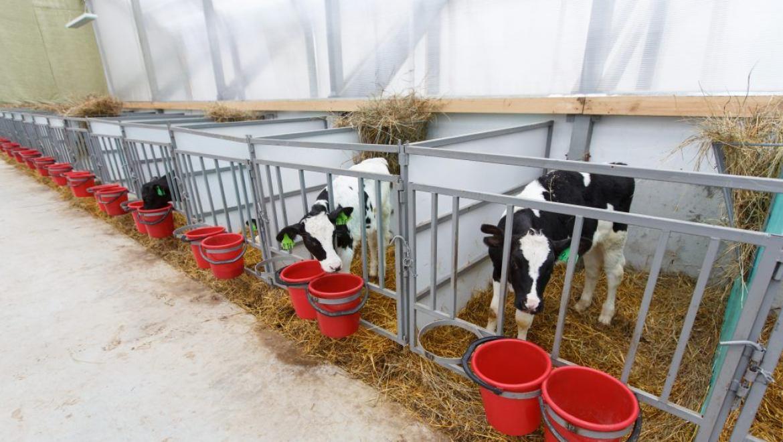 Полицейские предотвратили кражу с территории фермы