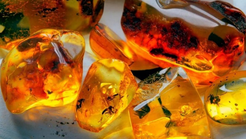 Доисторические насекомые в янтаре