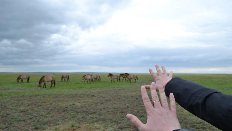 Заповедник «Оренбургский» приглашает на фестиваль «Дыхание степи»