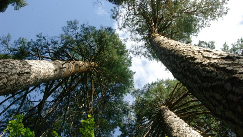В Оренбургской области обработано более 220 га леса от пилильщика