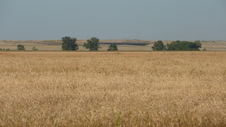 В Оренбургской области намолотили миллион тонн зерна