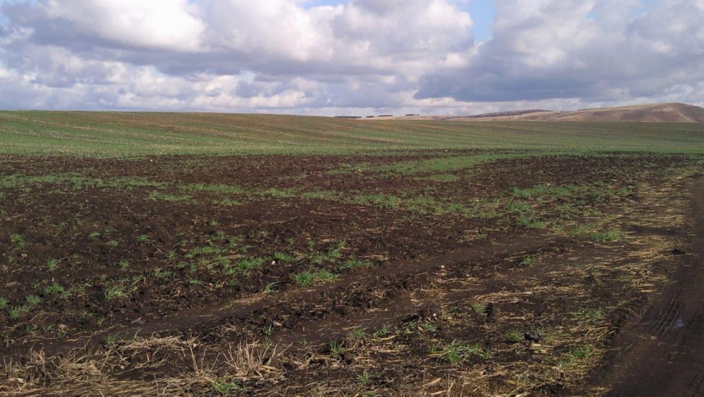 В Оренбуржье начались полевые работы