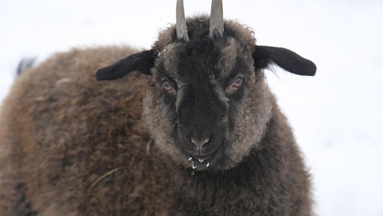 В гостях у козы Изоньки