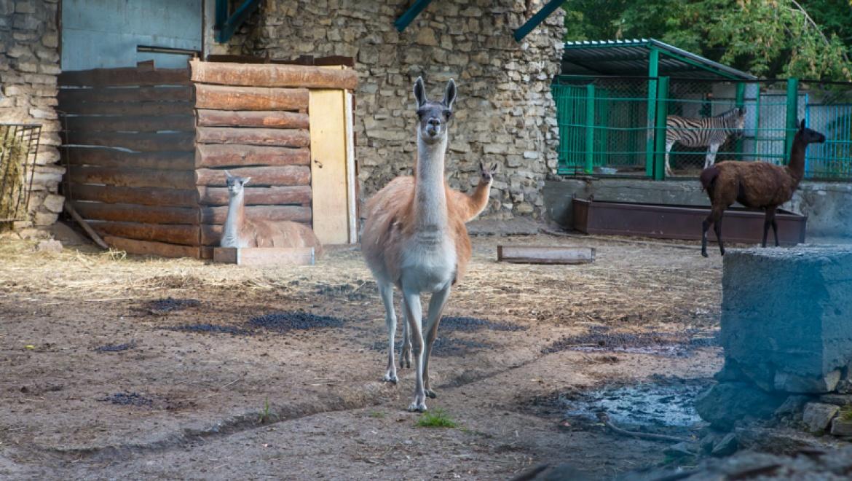 Преображение Казанского зооботсада начнется в 2015 году