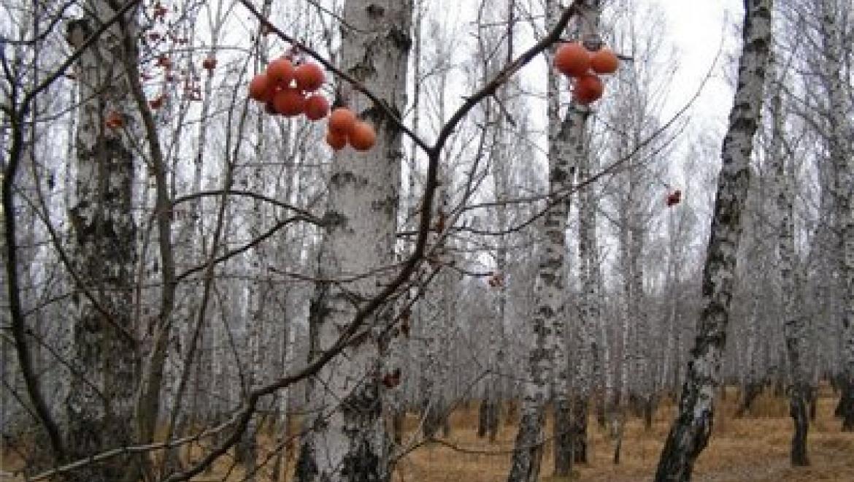 Днем 12 ноября в Казани прогнозируются плюсовые температуры