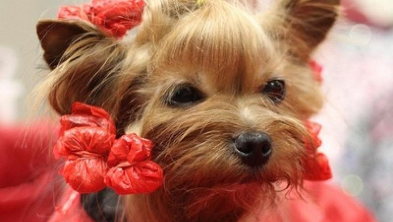 6 декабря в Казани пройдет выставка собак