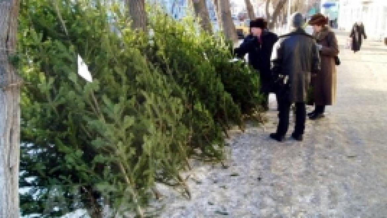 В Башкортостане заготовили 105 тысяч новогодних елок