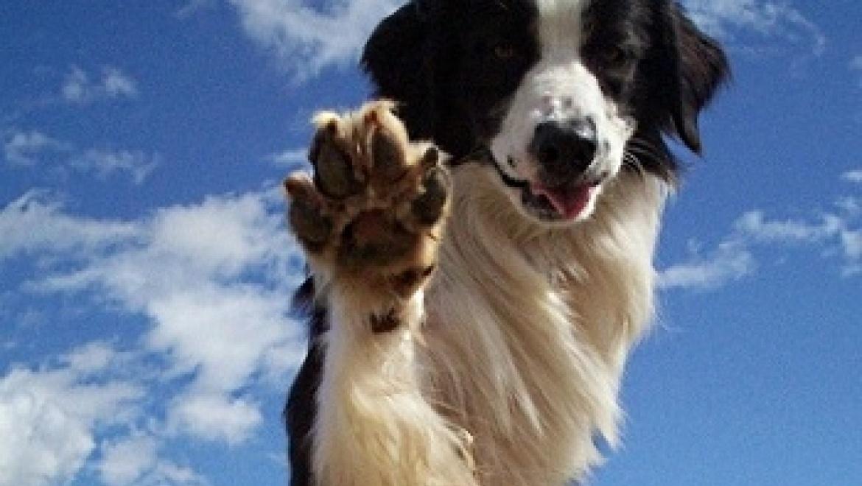 Около 100 пород собак будет представлено на региональной выставке в Казани