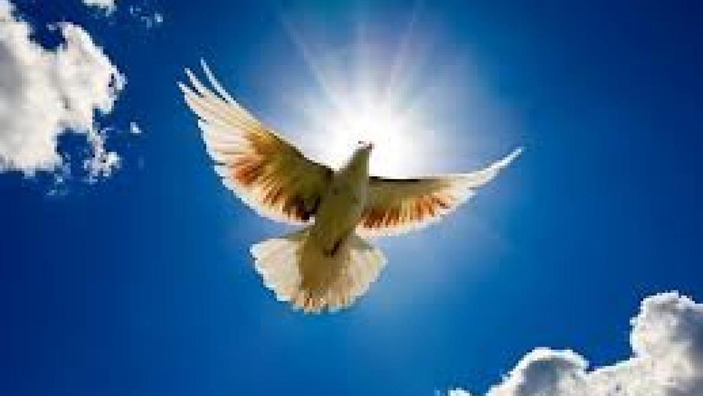 Сотни бумажных голубей взмоют в небо над Оренбургом