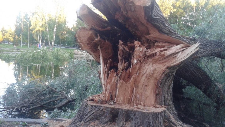 И.Метшин: «Рубка деревьев без разрешения – вопиющий случай»