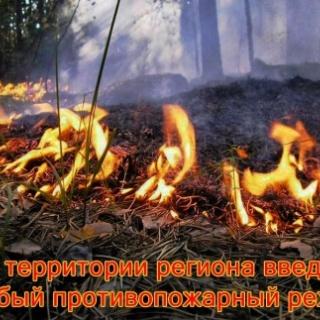 Введен особый противопожарный режим