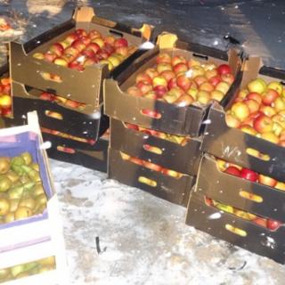 В Оренбургской области пресечен ввоз двух партий «санкционных» фруктов
