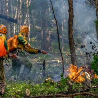 Сегодня тушат 55 лесных пожаров в 12 регионах России