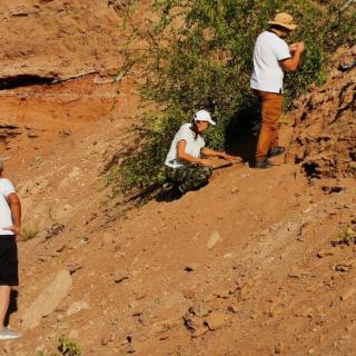 В Оренбуржье палеонтологи обнаружили остатки триасовой амфибии