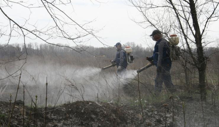 В Оренбурге начали борьбу с личинками комаров