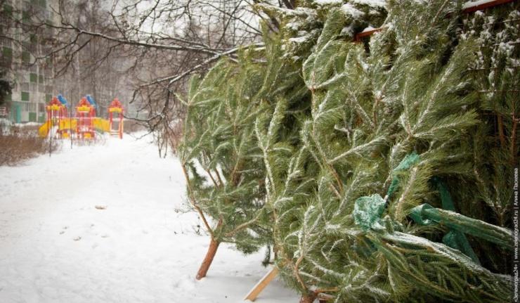 Где в Оренбурге можно купить елку?